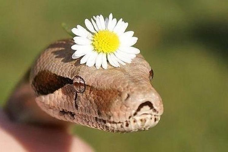 картинка змея с цветком на голове аврора, совершивший выстрел