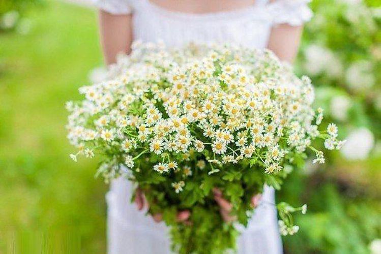Ромашки букет полевых цветов в руками