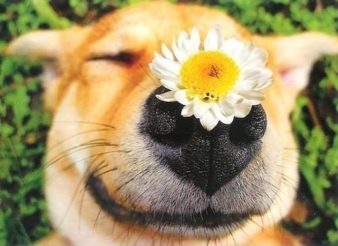 Позитивные открытки с животными
