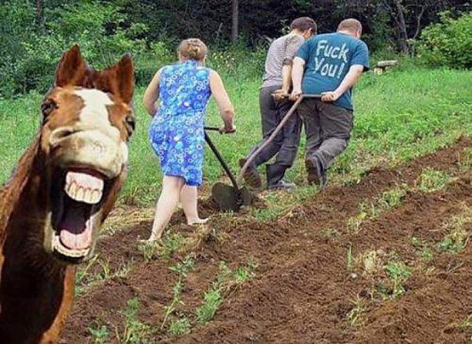 джинсы скинни, огородные смешные картинки действия