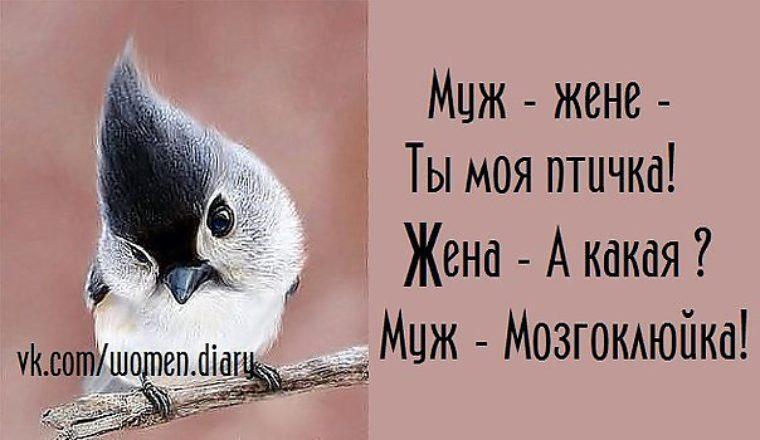 Картинки птичка моя, пасхе своими