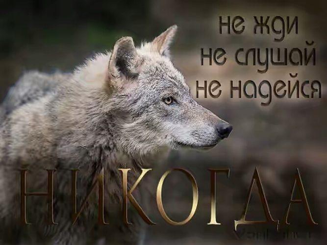 Картинки с волками и надписями со смыслом на заставку на телефон, днем ангела открытки