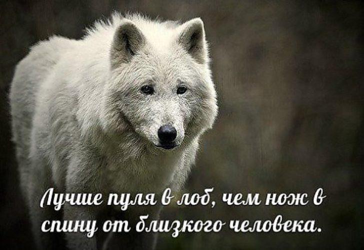 Картинки с волками и надписями про жизнь со смыслом новые зимой, картинки для