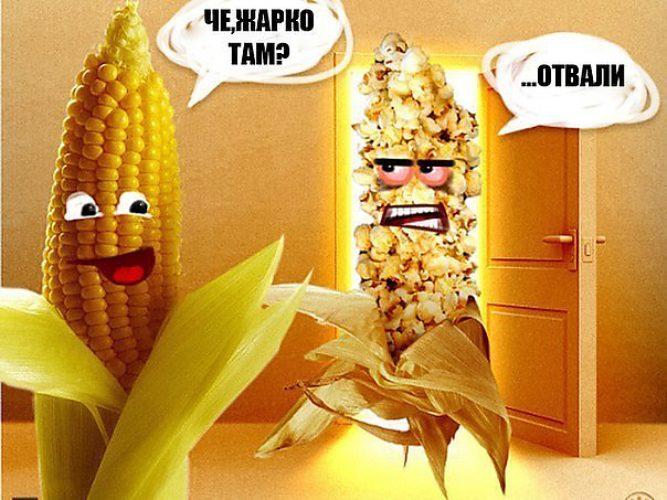 картинка кукурузы в жару