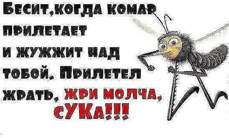 картинки с фразами про комаров смешные можно носить