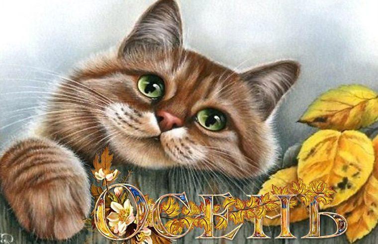 Февраль днем, открытки не грусти осенью