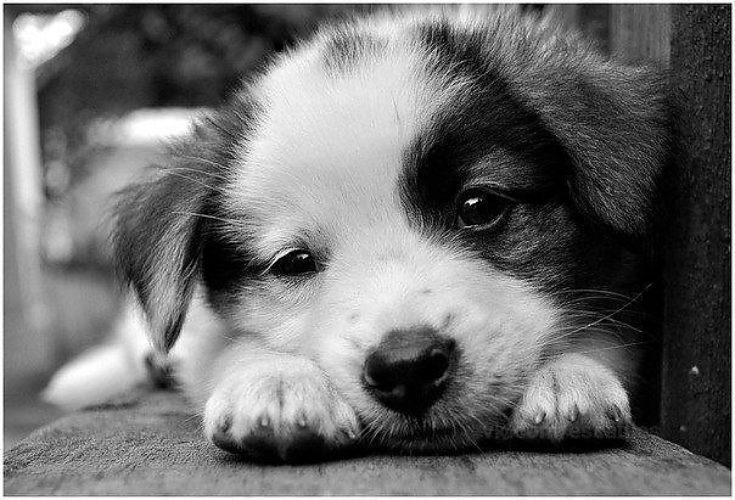 Картинки черно белые собачки милые