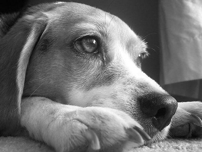 Картинки собак с надписью не плачь