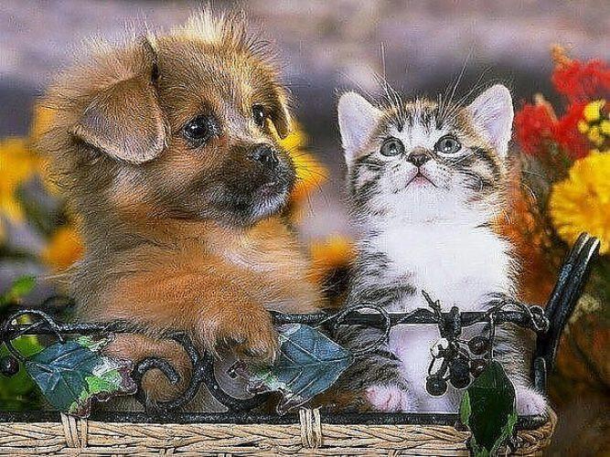 общежитий открытки животные прикольные фраза