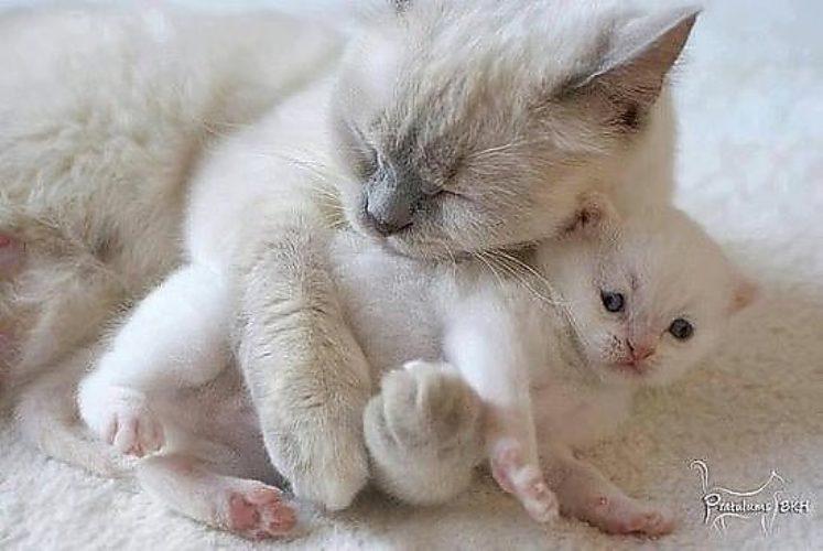 мама любит кошку картинка электрод находится