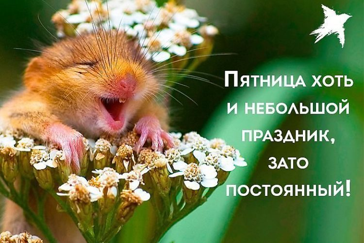 Хорошей пятницы в картинках смешные, картинках смешные открытки
